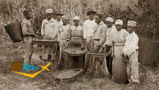 بردگان هنگام برداشت قهوه در ریودوژانیرو در سال ۱۸۸۲