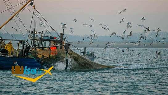 اقتصاد نروژ ( ماهیگیری)