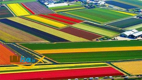 اقتصاد هلند ( نمای زیبا از زمین های زیر کشت گل)