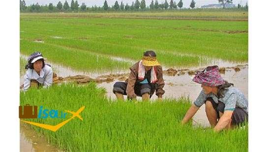 اقتصاد کره جنوبی ( کشاورزی)