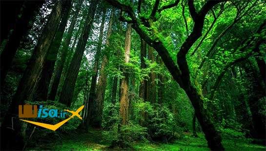 جغرافیای کره جنوبی (جنگل ها)
