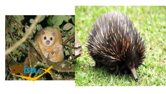 جغرافیای استرالیا (گونه های جانوری بومی)
